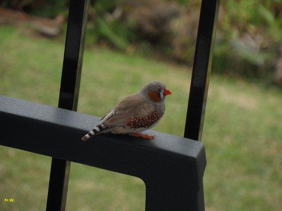 Hotel Los Jazmines Torremolinos: Prachtige vogel op ons balcon !