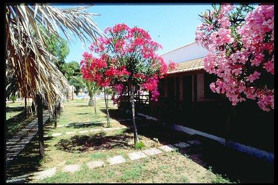Baja Papaja Village: Baja Papaja