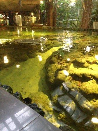 Snake House : бассейн с огромной черепахой