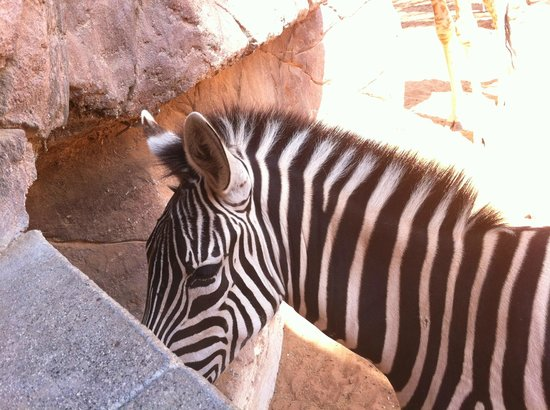Emirates Park Zoo: Nice highlights!