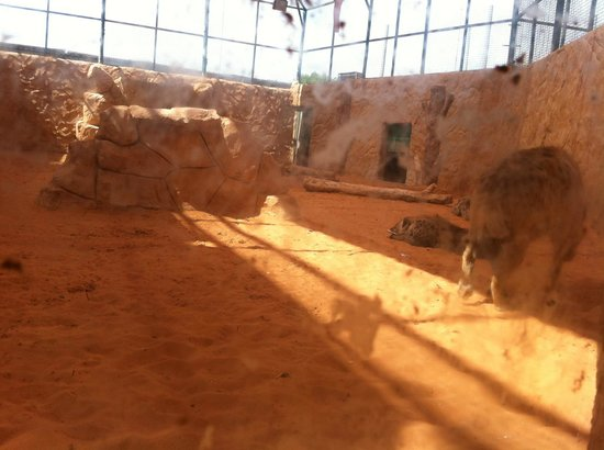 Emirates Park Zoo: You can see them behind double glass windows.
