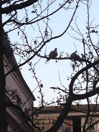 Hotel des Grandes Ecoles: Fåglar som kvittrar