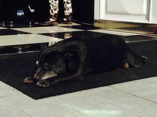 The Yard Hotel: Peanut, the charming hotel dog