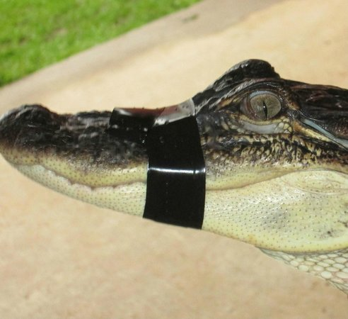Insta-Gator Ranch : Ready for my close up!