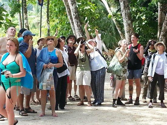 Playa Manuel Antonio: Crowd at the beach looking up...