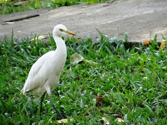 Hotel Elephant Reach: The egrets are bold!