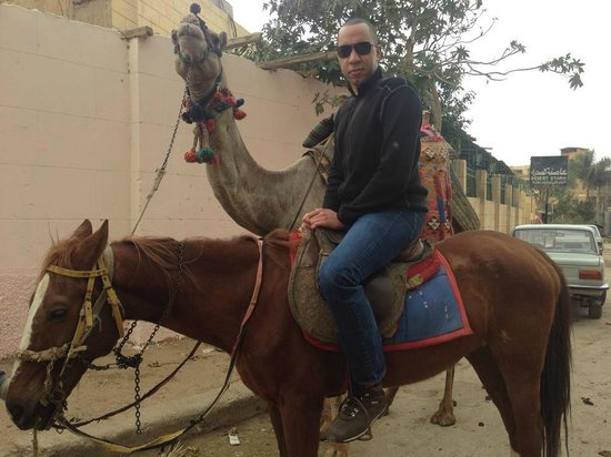 Plateau de Gizeh : You know what they say about big men.... small horse