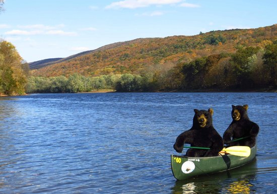 Delaware Water Gap, Pensilvania: Edge of the Woods Outfitters. Bears love the River.