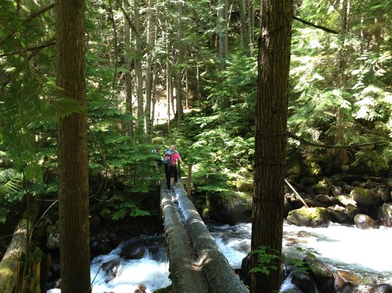 Mountain Trek Fitness Retreat & Health Spa : Hiking over raging water and into the woods