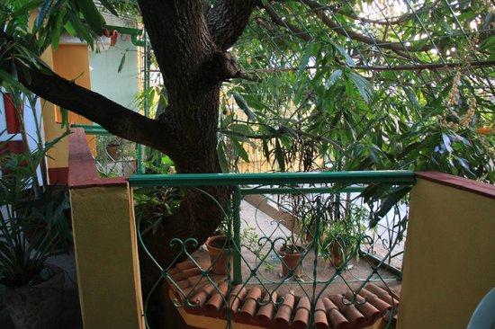 Casa Hospedaje Jesus Fernandez: Der Mangobaum, die Mitte des Hauses