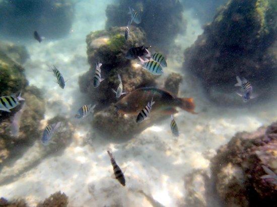 Parc Xel-Ha : Lots of different kinds of fish