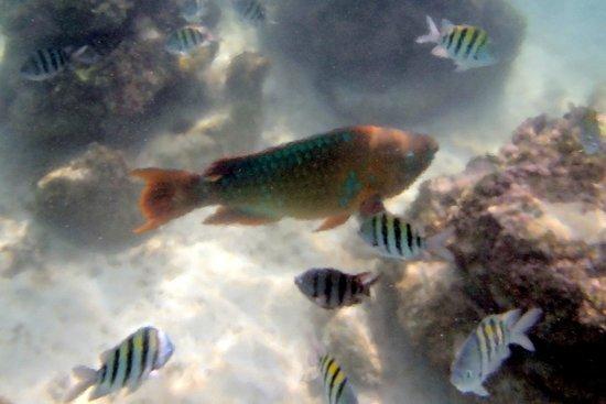 Parc Xel-Ha : Tropical fish