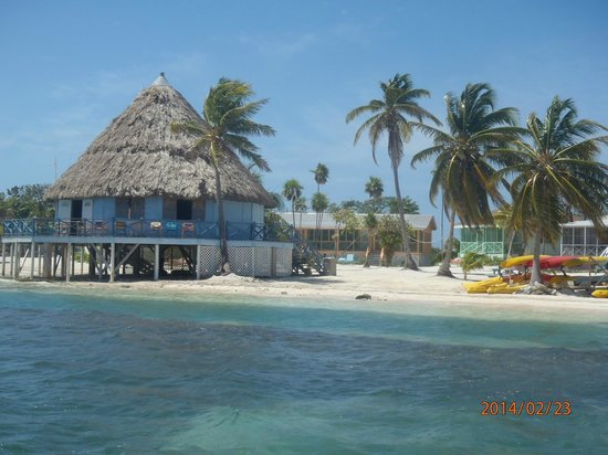 Blackbird Caye Resort : Beach Bar
