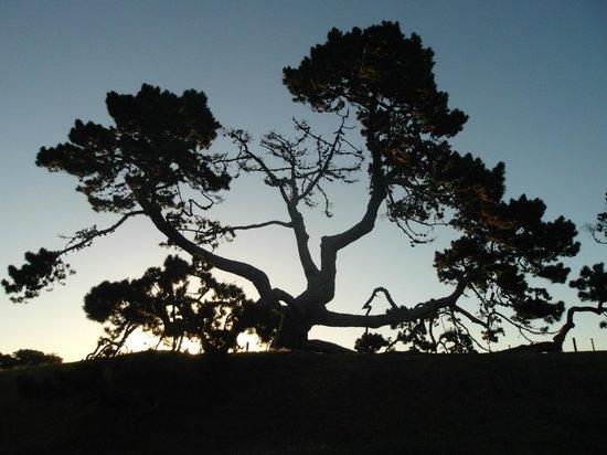 One Tree Hill (Maungakiekie) : Alberi arzigogolati