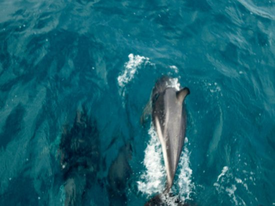 Dolphin Encounter: Delfini