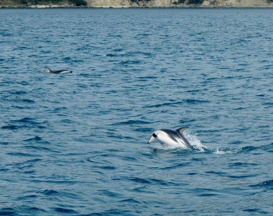 Dolphin Encounter: Delfini