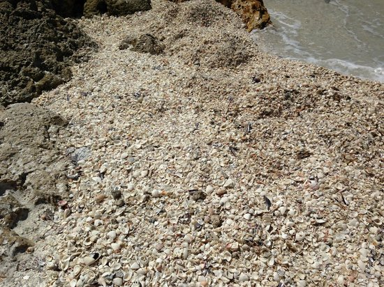 Hilton Marco Island Beach Resort: Shells on the beach