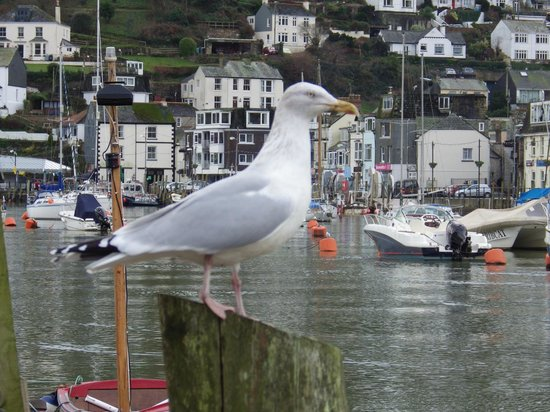 Little Harbour Guest House Updated 2018 Guesthouse Reviews Price Comparison Looe Cornwall