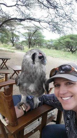 Manyara Ranch Conservancy : Resident Eagle Owl