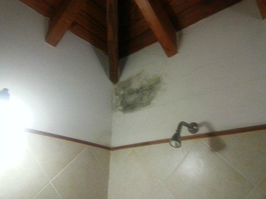 Hongos Azulejos Baño:La Guarida Hotel: Hongos y humedad en la pared del baño donde se