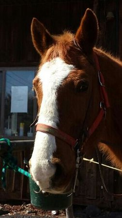 Mountain Creek Riding Stables: Jack