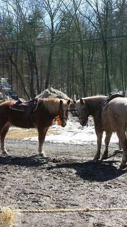 Mountain Creek Riding Stables: Humphrey (left) and Turbo