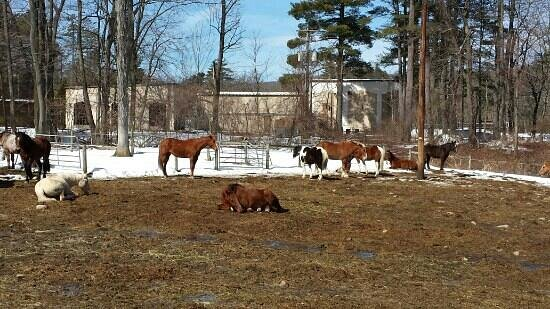 Mountain Creek Riding Stables : The boys enjoying the sun :)