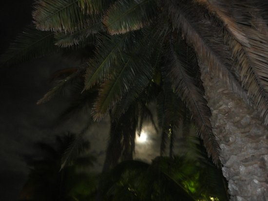 Lime Tree Bay Resort : on a moonlit evening over the Gulf from our suite