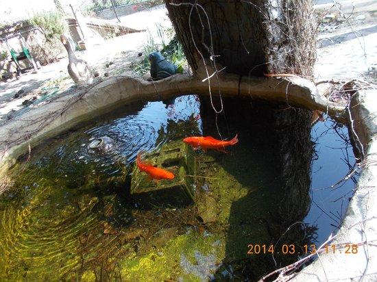 Vasca dei pesci rossi picture of casa oca ferrara for Filtro vasca pesci rossi