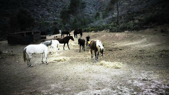 Ibiza Horse Valley: Horsing around