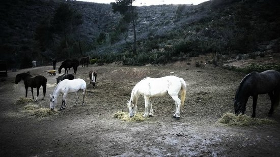 Ibiza Horse Valley: That's my horse Coco