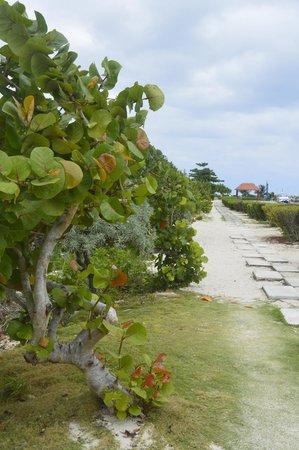 Now Jade Riviera Cancun : port de puerto morelos