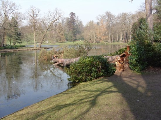 Claremont Landscape Garden: View of the lake with a fallen pine tree from the recent weather.