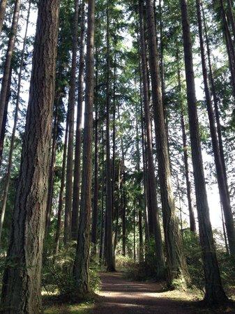 Kitsap Memorial State Park : Walking through the towering evergreens