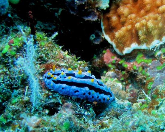 Jean-Michel Cousteau Diving: Nudibranch