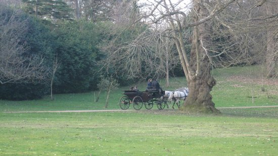 Petworth House and Park: Carriage rides