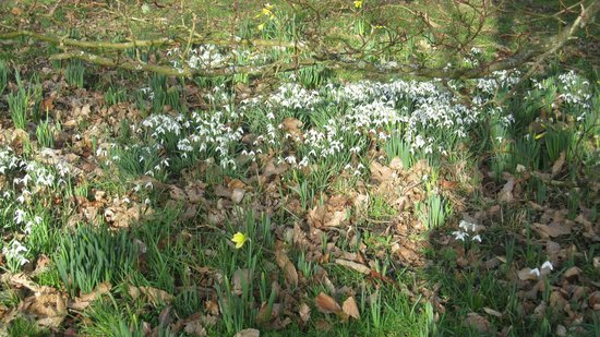 Petworth House and Park: Touch of Spring