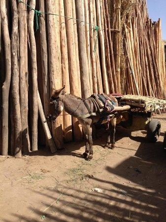 Riad Samsara: The Old Market and donkey!