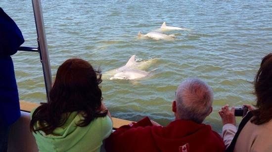 Captain Mike's Dolphin Tours : passengers excited watching dolphins on Capt. Mike's Dolphin Adventure