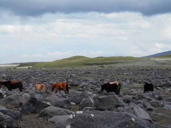 Biking Dutchman: Wild horses and volcanic rock