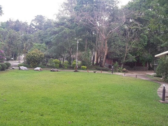 Jungle House Hotel: Lawn