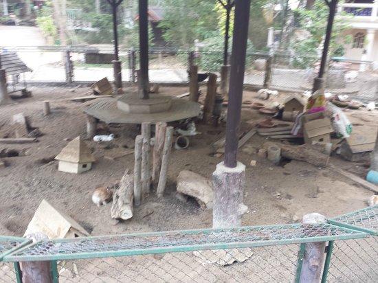 Jungle House Hotel: Rabbit enclosure