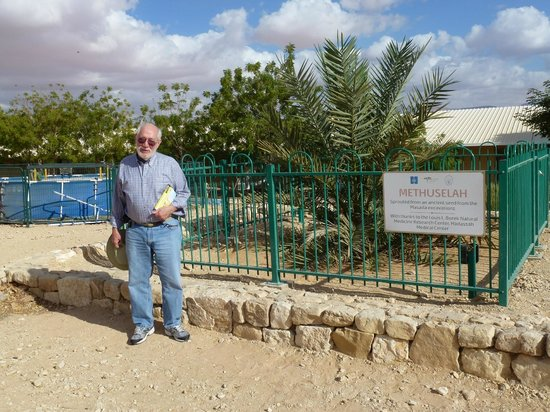 Keren Kolot, Kibbutz Ketura: The Methuselah Tree, a Judean Date Palm germinated from a 2000 year old seed