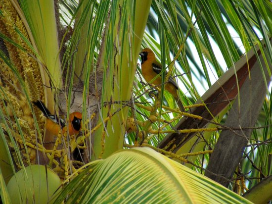 Hotel Marina El Cid Spa & Beach Resort : pretty birds