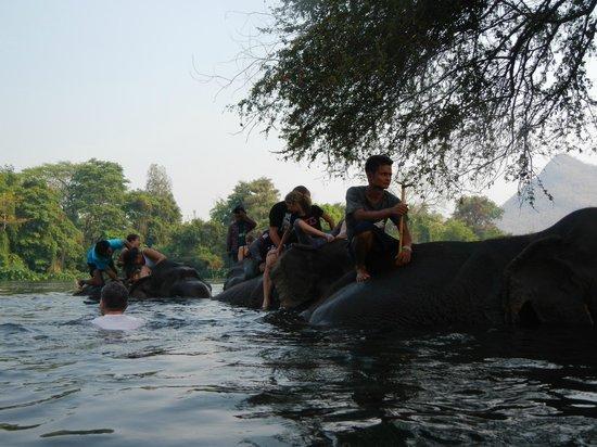 ElephantsWorld: Elephants