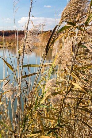 Pickerel Creek Wildlife Area: Reeds and Pond