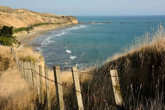 Gannet Beach Adventures : View from Cape Kidnappers