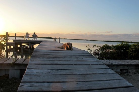 Cocotal Inn & Cabanas : Maya, the resident pooch, keeps guests company at sunset
