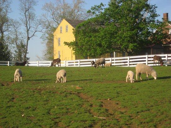 Shaker Village of Pleasant Hill - The Inn : Pasture