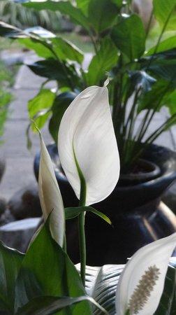 Dai Nonni Hotel: flores